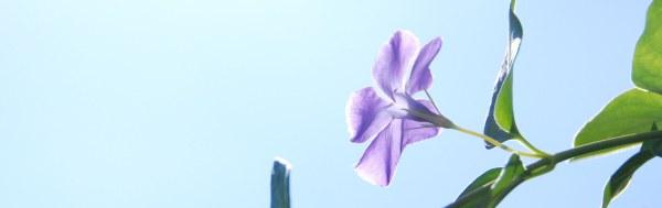 Flor azul hor