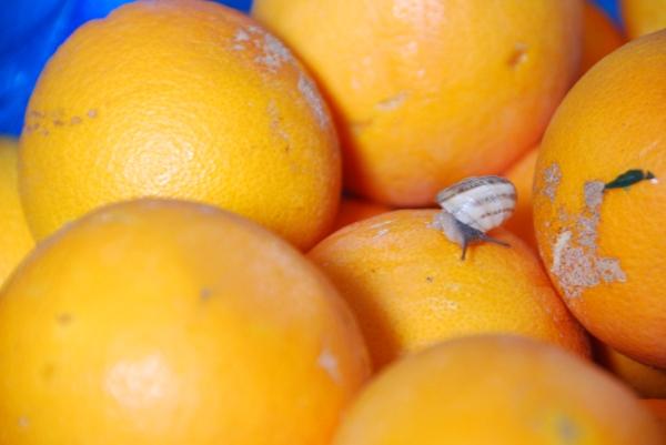 naranjas 001