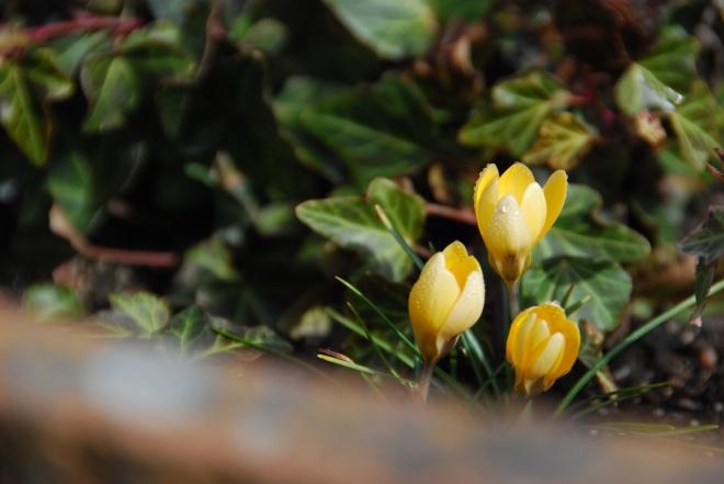 primavera 005