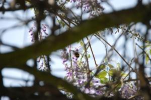 flor glici 002