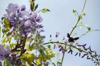 flor glici 017