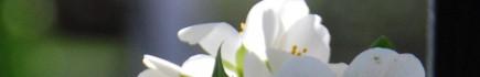 cropped-flor-neat-vert.jpg