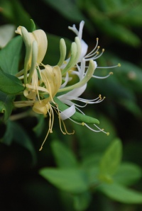 Esencia flor